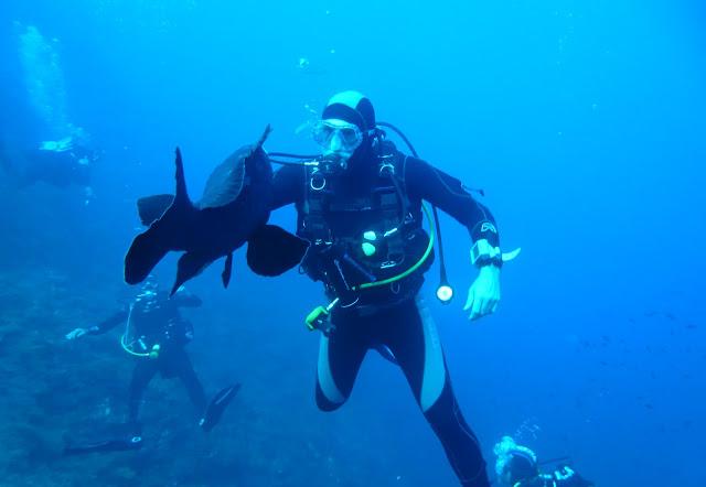 le plongeur et le mérou