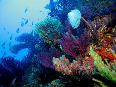 Bellevue plongée Ile de RIOU